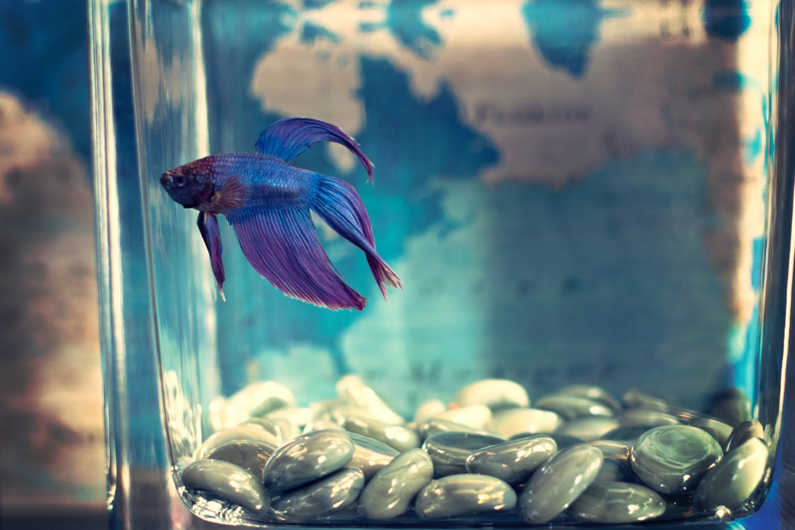 7 ideal reasons to get a fish tank that may surprise you ideal